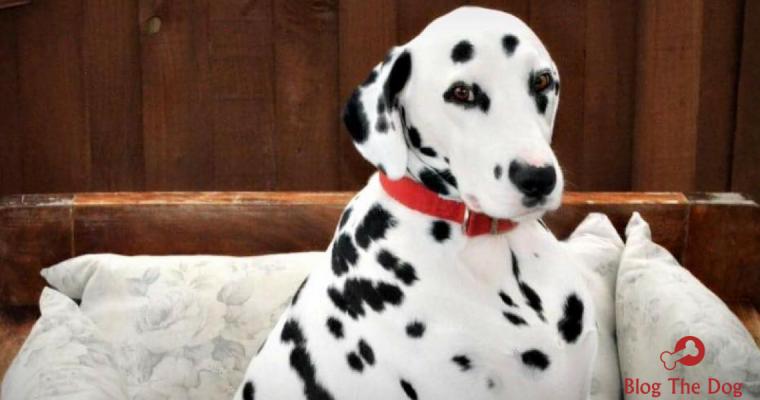Blog The Dog: Meet Louis
