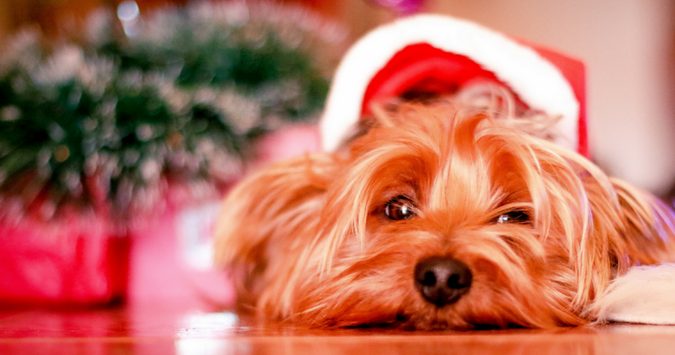 Blogmas Day 5: Gift Guide for Dogs